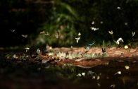 WWF: Diversifying Landscapes